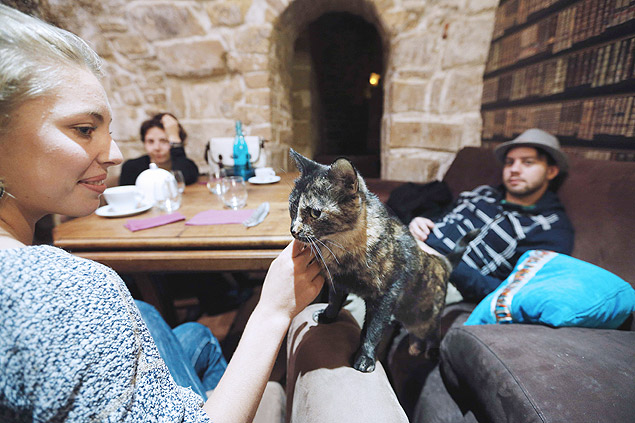 Gatos e café!
