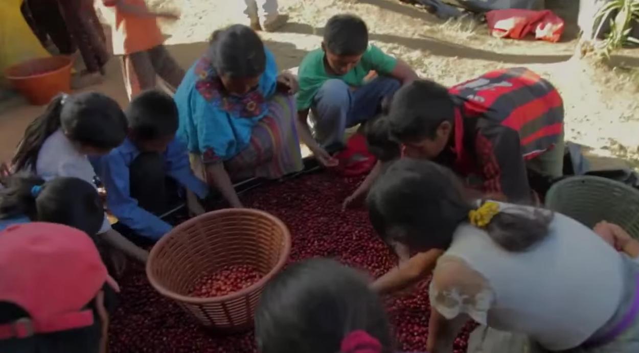 Paixão pelo café ao redor do mundo é tema de documentário